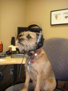 Buster the DMC mascot dog
